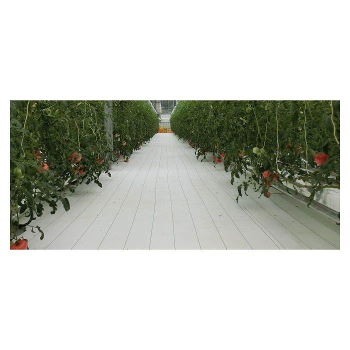 ルンルンシート白ピカ 0.5×100m