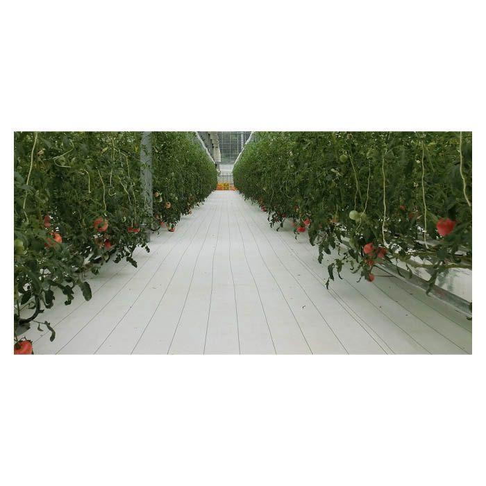 ルンルンシート白ピカ 1.5×100m