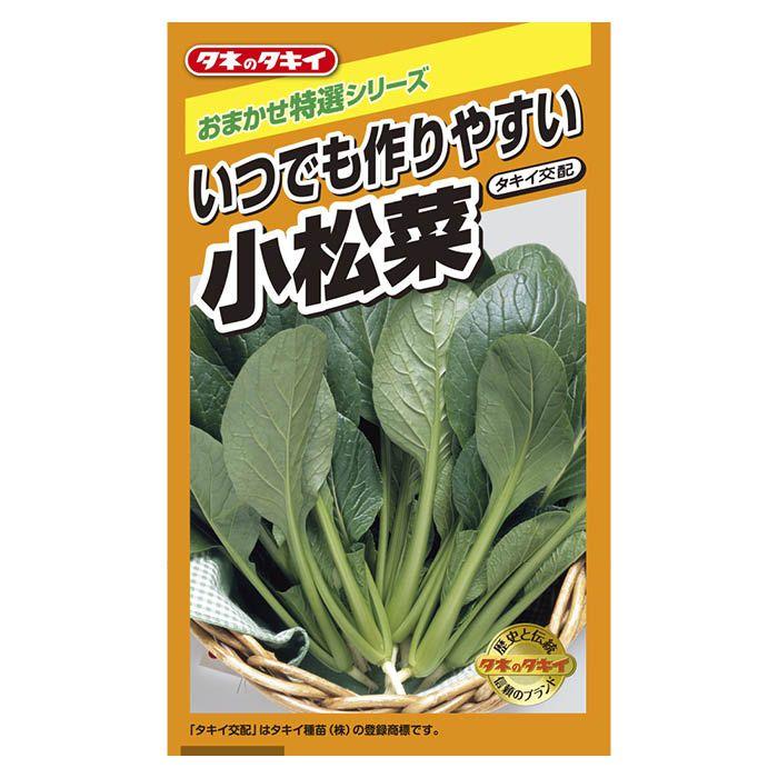 コマツナ いつでも作りやすい小松菜